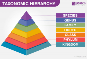 Taxonomy Hierarchy
