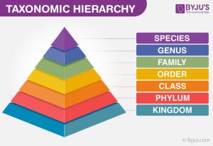 Taxonomy Hierarchy